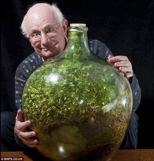 Image result for what is a terrarium